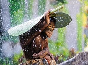 habillage-pluie-pour-pousette-bebe